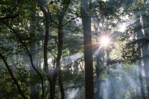 Natuur - Zonnestralen