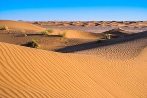Landschappen - Graspollen in de woestijn
