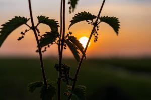 Natuur - Prikkelbare zon