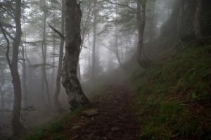 Natuur - Vallee de la Glere