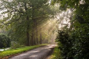 Natuur - Zonnestralen Horsten
